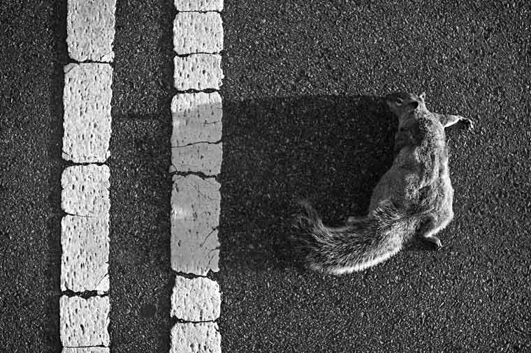 http://www.billemory.com/blogimg04/cn0906-squirrel-c2094.jpg